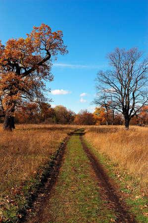 autumn timber road Stock Photo