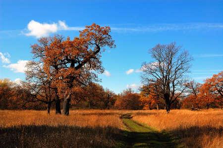 autumn wood to prepare to winter