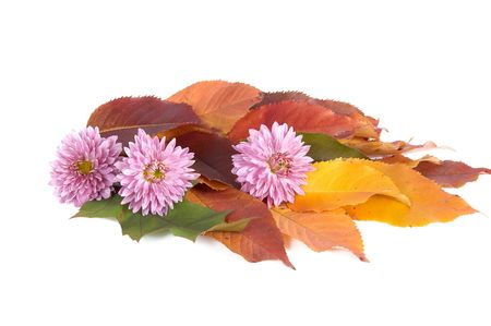 Autumn bouquet isolated on a white background. photo