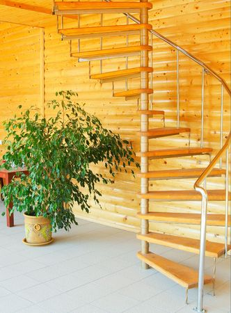 Wonderful ficus and spiral staircase in modern house.