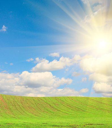 splendid: Field of grass and splendid sunrise.