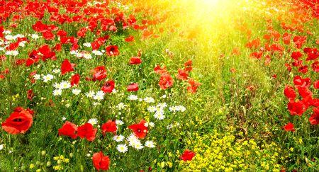 Splendid summer morning on the green meadow.