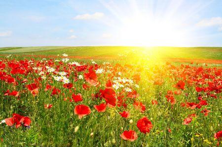 Wonderful green meadow and nice sunset. Stock Photo