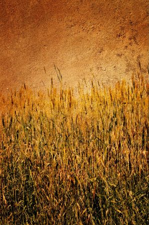 Antique view of wall and field of wheat on it. photo