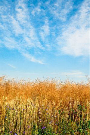 Golden field and wonderful sky with clouds by summer. Stock Photo - 5433234