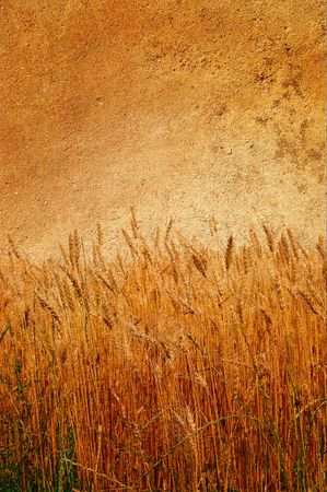 Abstract view of wall and field of wheat on it. photo