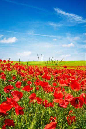 Beautiful landscape of poppies and blue sky. Stock Photo