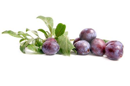 Branch of fresh plums isolated on a white background.