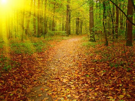Autumn morning in the deep forest. photo