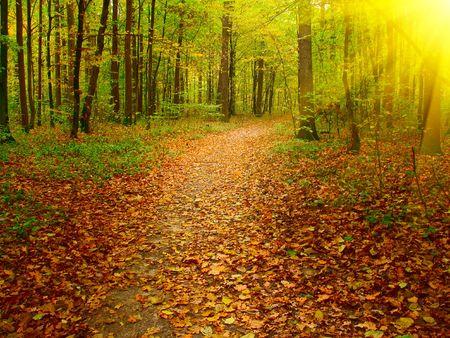 Sunbeams carril cubierto en el bosque. Foto de archivo
