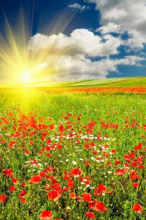 Beaux p�turages vert et beau coucher de soleil. Banque d'images