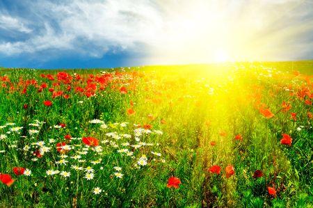 Wonderful green meadow and nice sunset by summer. 版權商用圖片