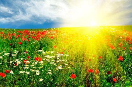 Wonderful green meadow and nice sunset by summer. Stock Photo