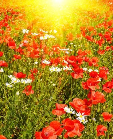 Amazing green meadow and nice sunbeams by summer. Stock Photo - 6209376