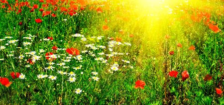 Wonderful green meadow and nice sunbeams by summer.  photo