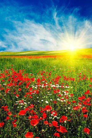 Beaux p�turages vert et beau coucher de soleil en �t�. Banque d'images