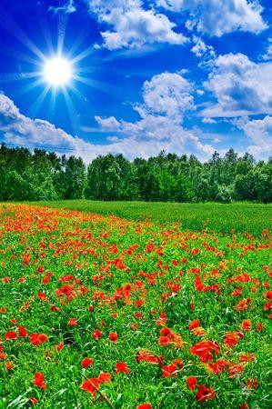 Beautiful,amazing landscape by summer. photo