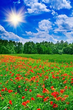 Fun sun hight in the sky above green meadow. Stock Photo - 6882021