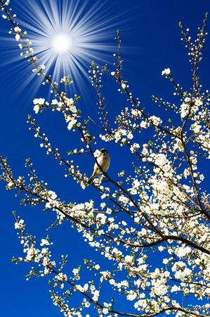 Small  sparrow sing song on the spring tree and fun sun.  photo
