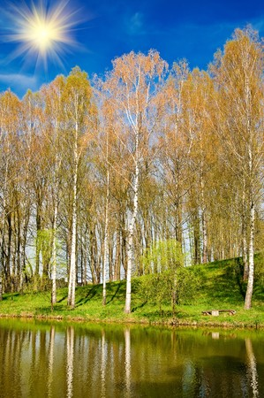 Beautiful pond and nice birches reflection be springtime.  photo