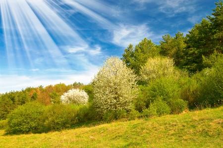 unusually: Unusually sunbeams above spring grove. Stock Photo