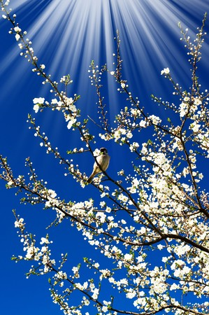 easter sunrise: Small  sparrow sing song on the spring tree and unusually sunbeams. Stock Photo