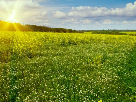 Wonderful view of meadow with camomile by spring. Stock Photo - 7037640