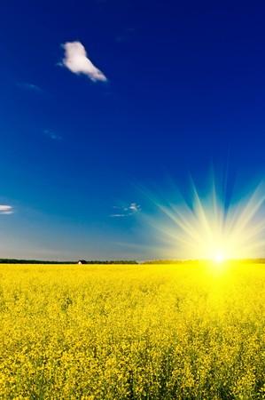 Wonderful sunset above golden rapefield by springtime. Stock Photo - 7037773