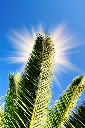 Green branch of palm against blue sky. photo