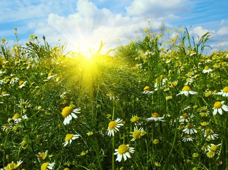 Fun sun and wonderful daisies against blue sky background. photo