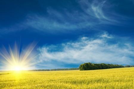 Green wheat and beautiful blue sky. Stock Photo - 7214920