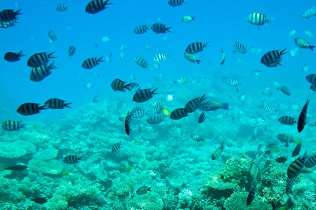 Underwater landscape of Red Sea. Stock Photo - 7214919