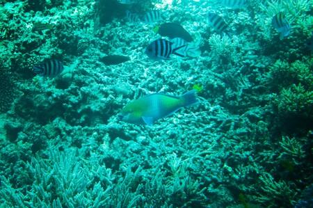 Wonderful,astonishing undersea world of Red sea. Stock Photo - 7242270
