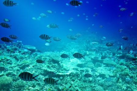 Wonderful underwater world of Red Sea. Stock Photo - 7256777
