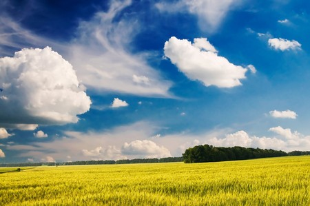 Green unripened wheat and beautiful blue sky with white clouds. Stock Photo - 7256773