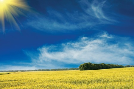 Splendid green field and the blue sky with sun. Stock Photo - 7262477