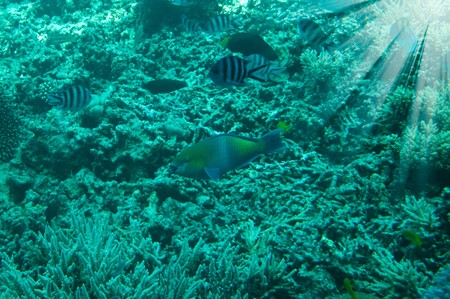 Astonishing undersea world of Red Sea and sunbeams in it. Stock Photo - 7262478