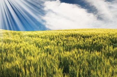 Fantastic sunbeams above green field of wheat. Stock Photo - 7275874