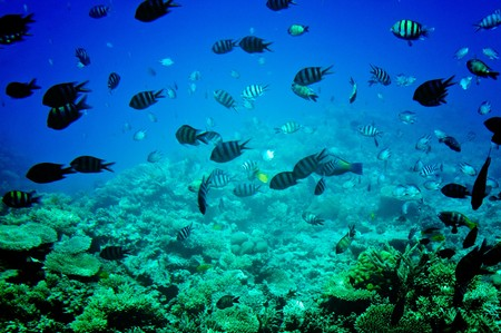 Underwater landscape of Red sea. Stock Photo - 7275868