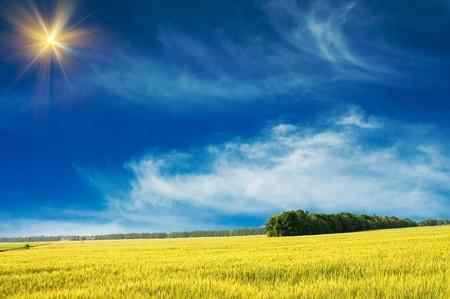 Green wheat and beautiful blue sky. Stock Photo - 7282540