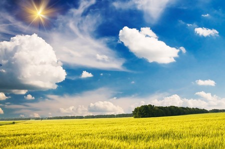 Splendid green field and the blue sky with sun. Stock Photo - 7293535
