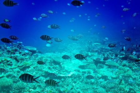 Astonishing undersea world of Red sea. Stock Photo - 7306385