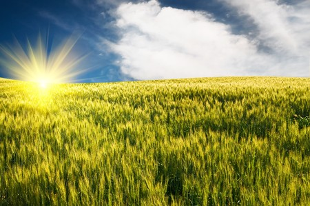Splendid green field and the blue sky with sun. Stock Photo - 7319397