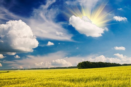 Blue sky with white clouds above the green field of wheat. Stock Photo - 7319391