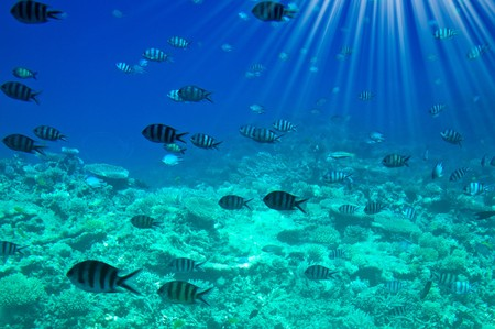 Underwater landscape of Red Sea. photo