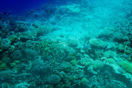 Underwater landscape of Red Sea.