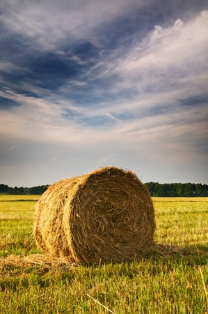 Rural landscape of haystacks. Stock Photo - 7423051