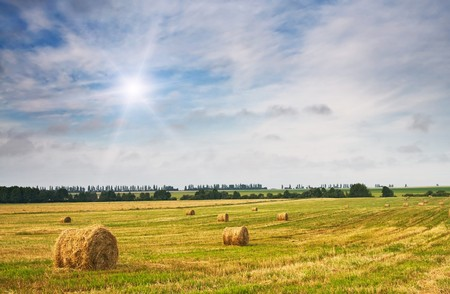 Field full of bales against tender sun in the blue sky.  Stock Photo - 7423037