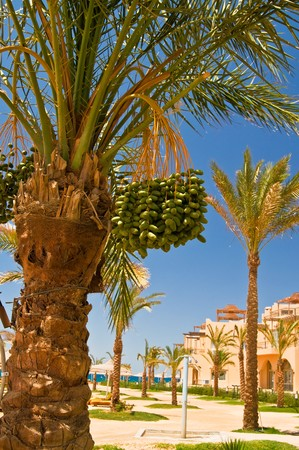 Palms and wonderful resort. photo