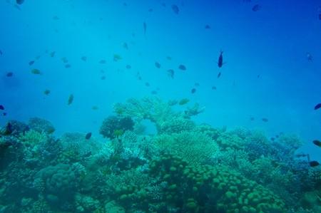 Astonishing undersea world of Red Sea. Stock Photo - 7423062
